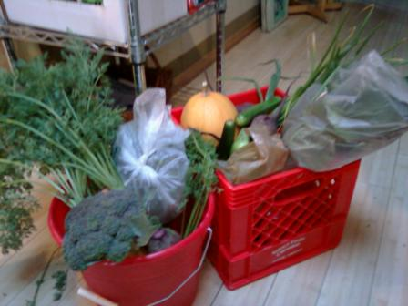 Contents of Full CSA Box